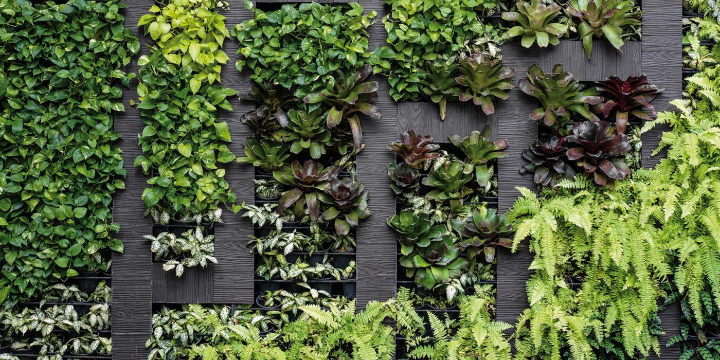 mur vegetalise