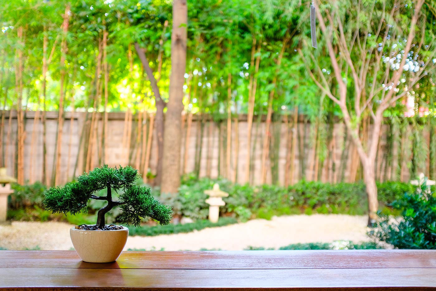 Bonsai jardin japonais