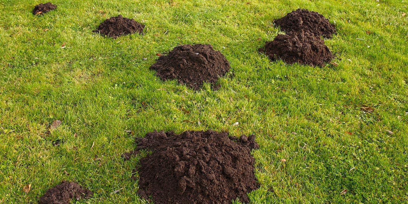 Photo Jardin Zen Chez Particulier comment se débarrasser des taupes dans le jardin ?