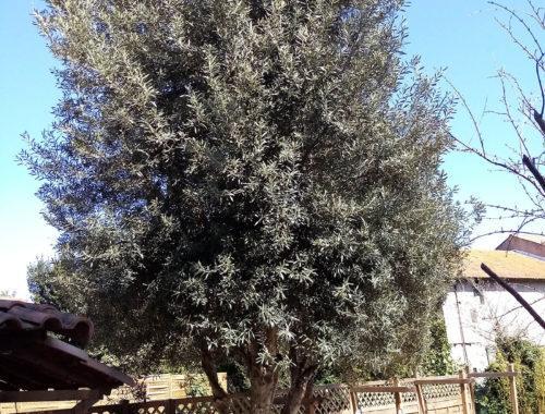 Allée des Verts, entretien de jardin à Moussan